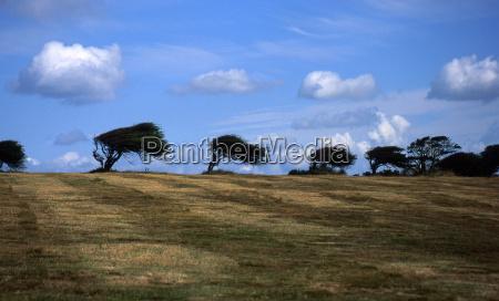 trees eu 0321