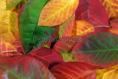 colours - 481448