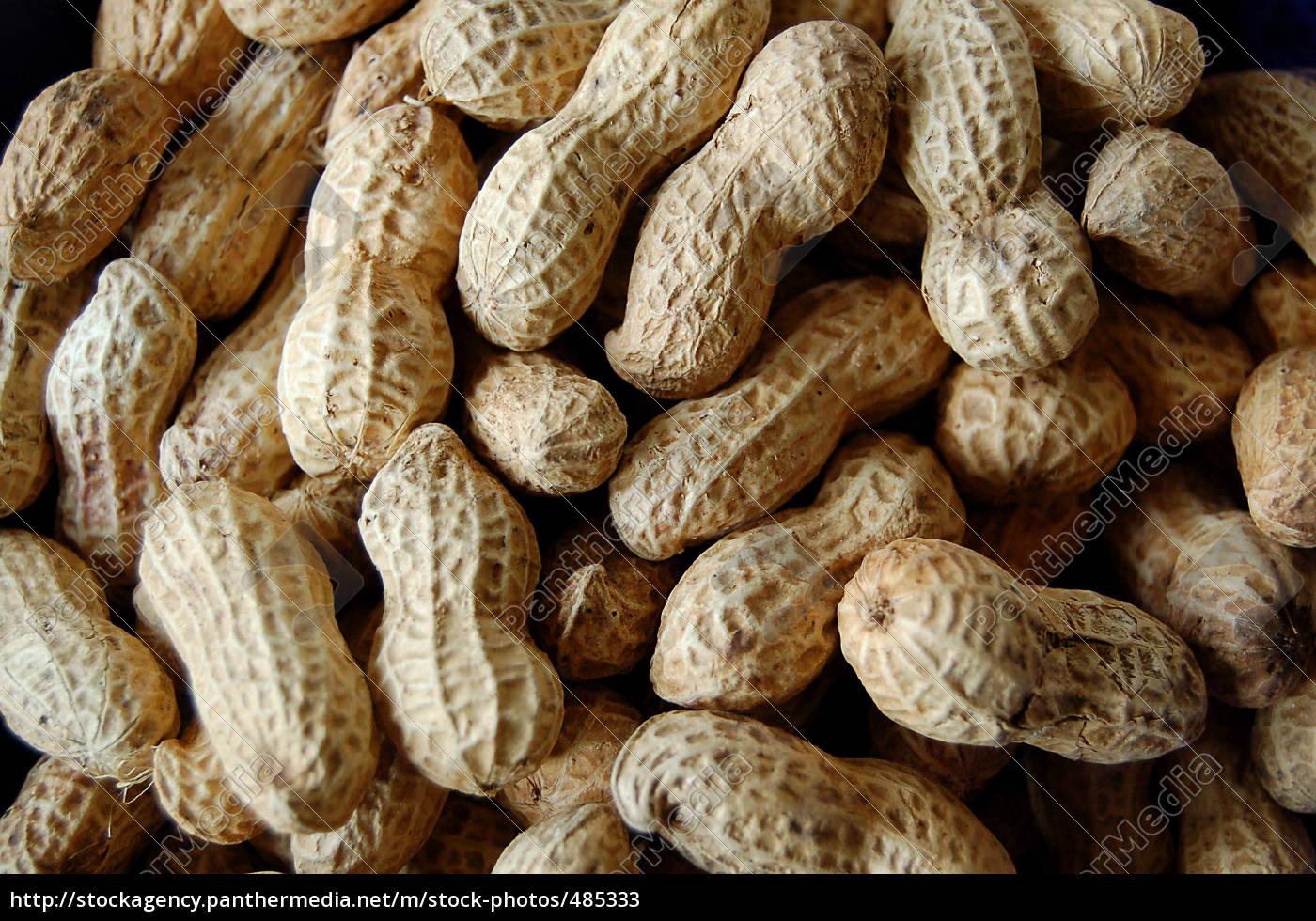 peanuts - 485333