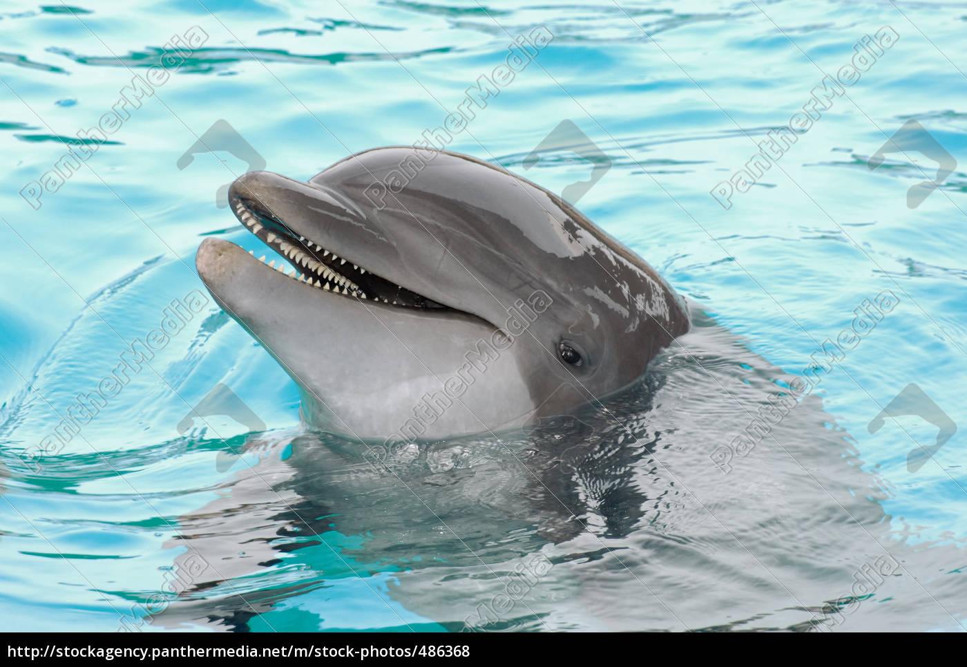 dolphin - 486368