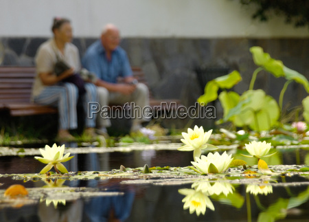 seniors, at, the, lily, pond - 486393