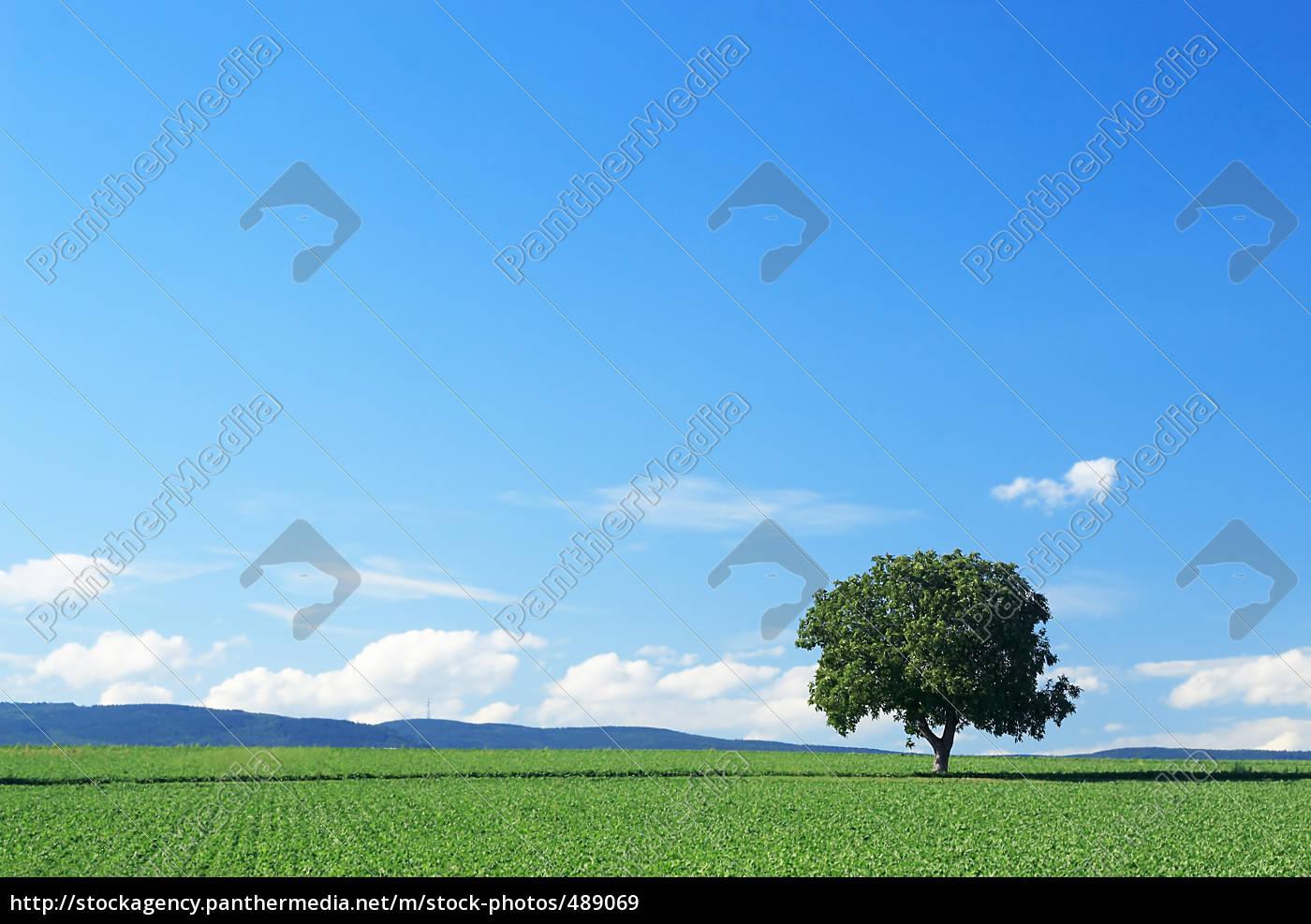 tree, series, pos.1b, on, 08/18/06 - 489069