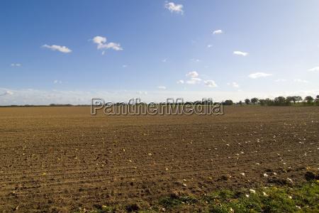 brown autumn field