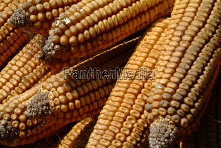 agriculture farming dry dried up barren