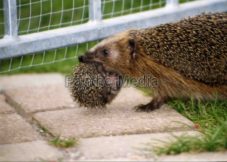 igel when moving