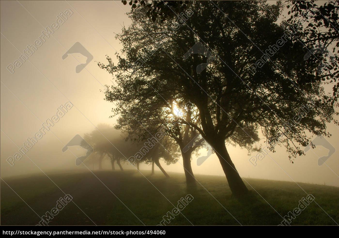 avenue, in, mist - 494060