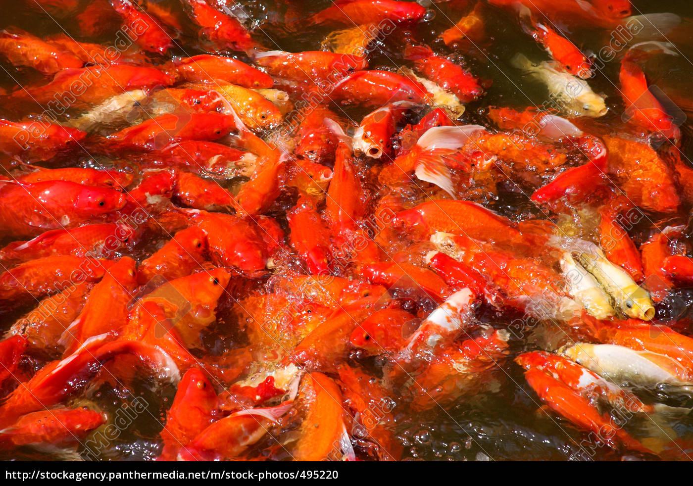 dogfish - 495220
