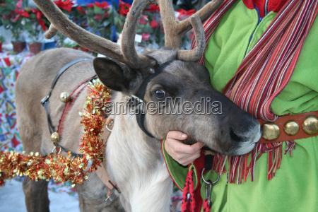reindeer - 498878