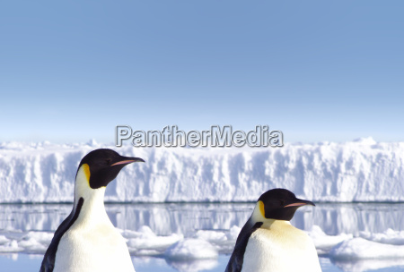 penguins - 501676