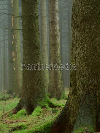 in, the, deep, dark, forest, ... - 504777