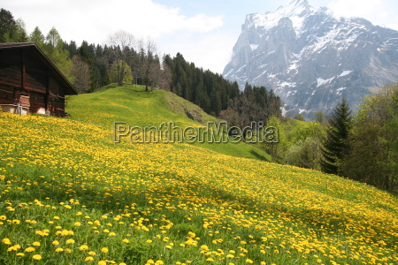 alpine, meadow - 508093