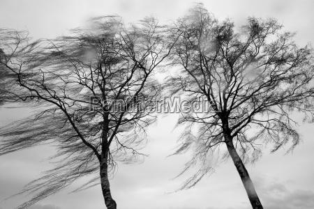 wind, and, rain - 511397