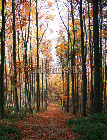 autumnal forest road no 4