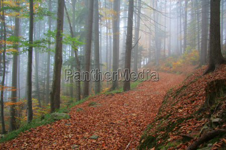 autumnal forest road no 5
