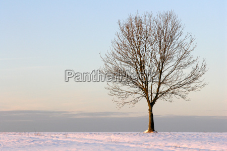 tree, in, winter - 513198