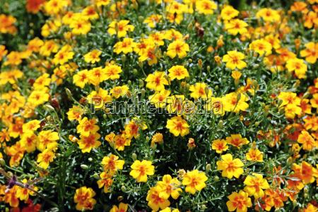 flowers sea on the island of