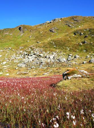 tyrolean, pasture - 514038