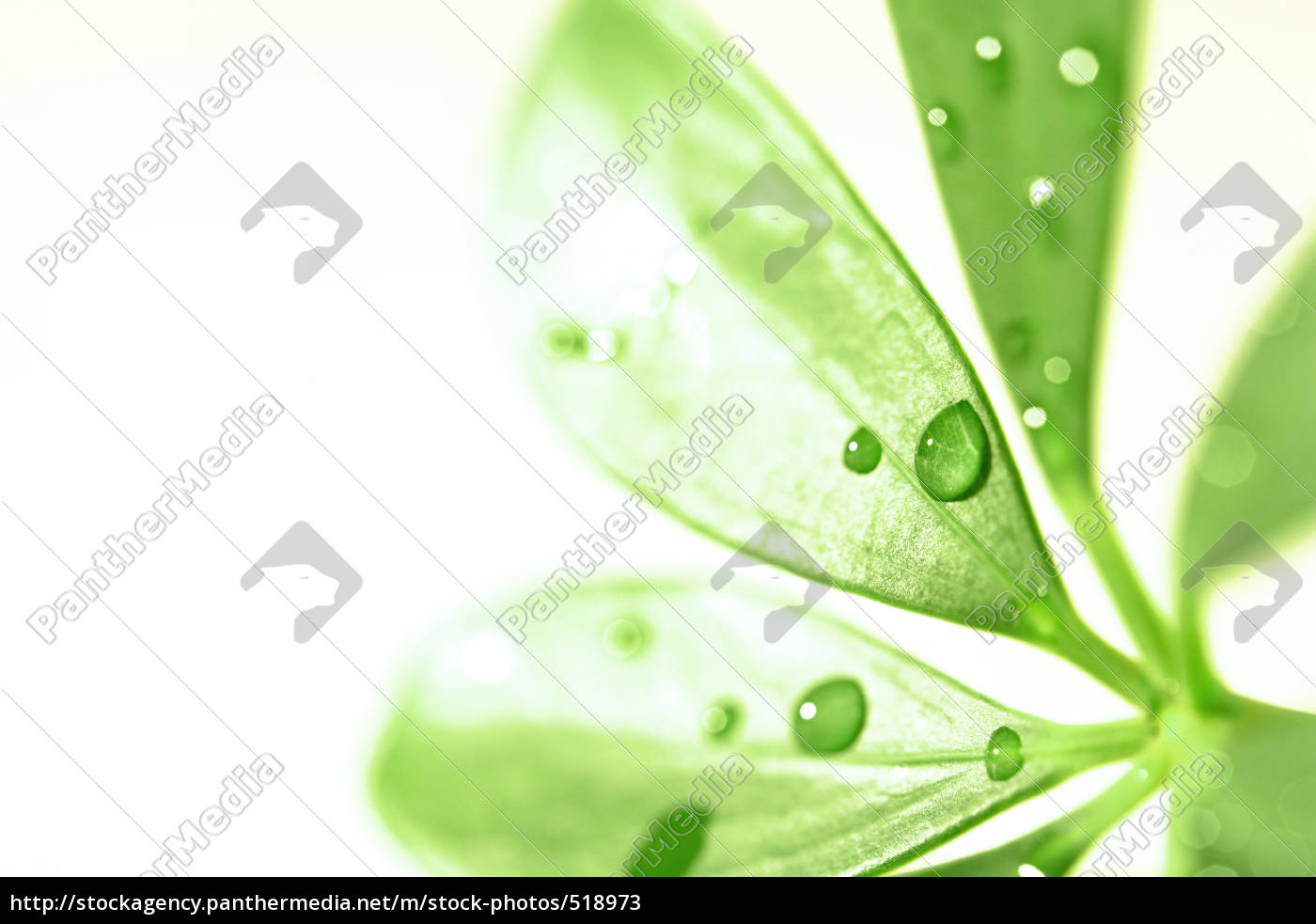 leaf, with, regentropfen - 518973