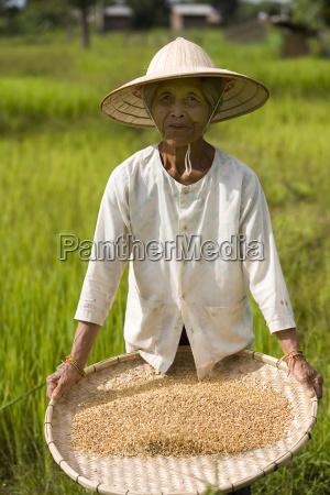 rice, farmer - 518121