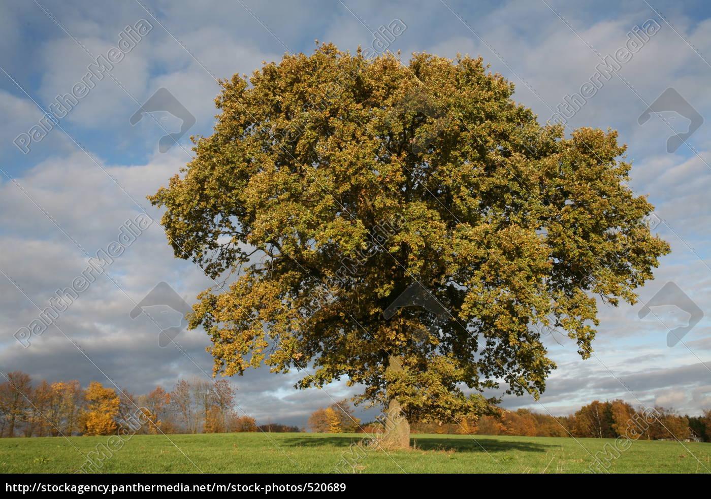 seasons, -, autumn - 520689