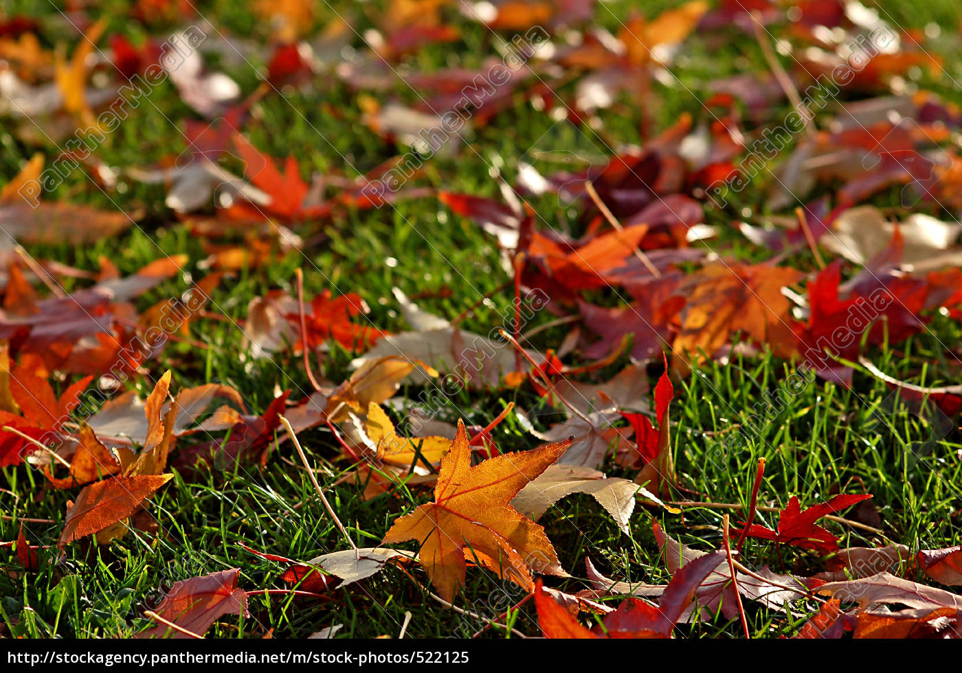 fall, leaves - 522125