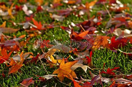 fall, leaves - 522125