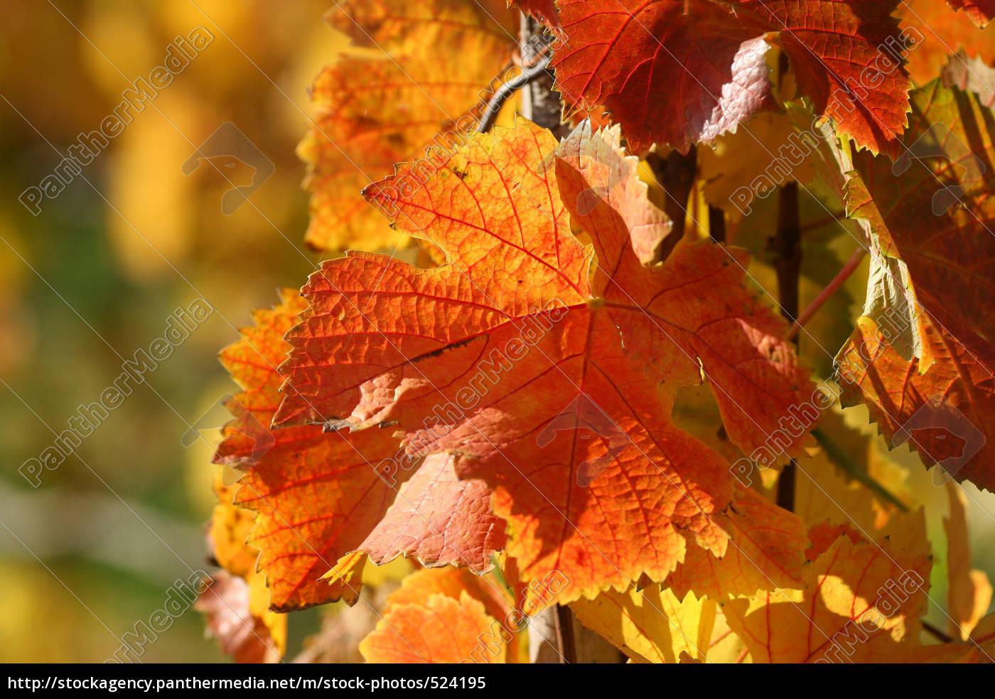 autumn, leaves - 524195