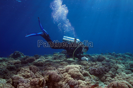 underwater, photography - 524858