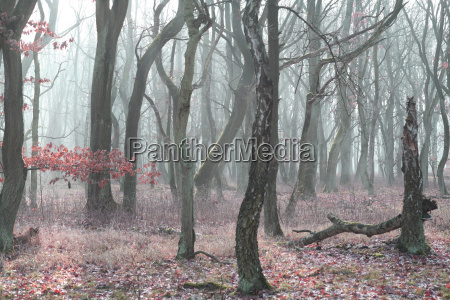 forest - 525608