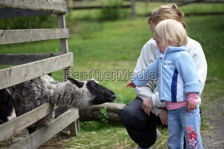 petting, zoo - 525761