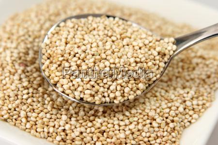 quinoa - 525688