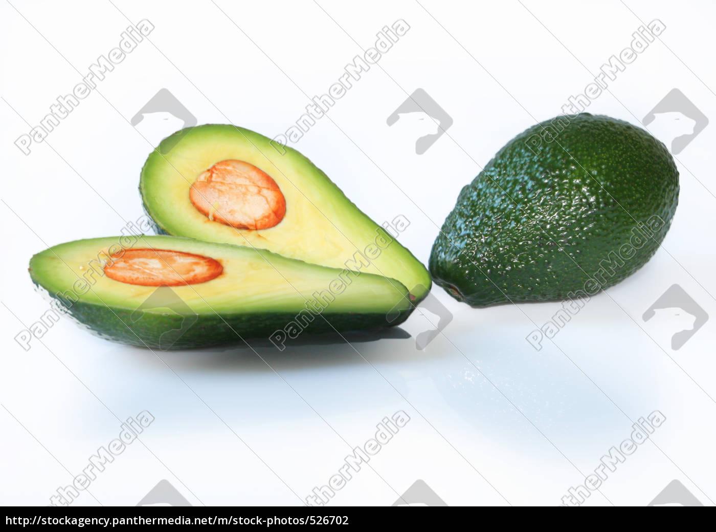 avocado - 526702