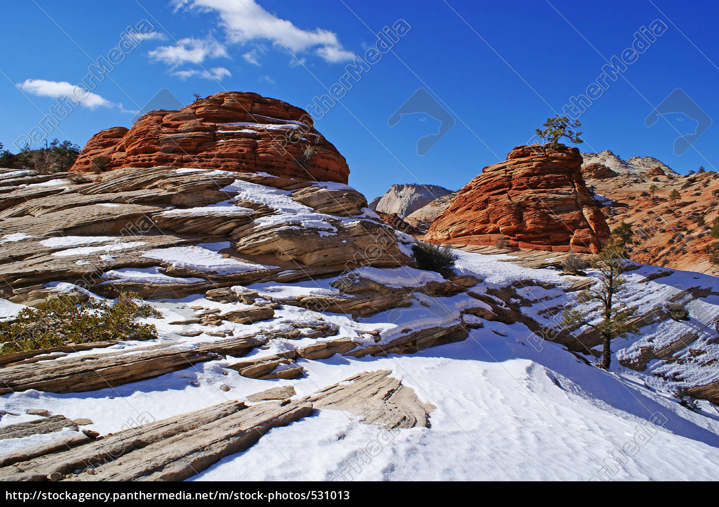 winter, in, zion, np - 531013