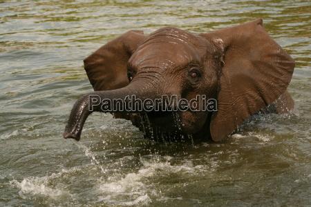 baby, elephant, bathing - 532073