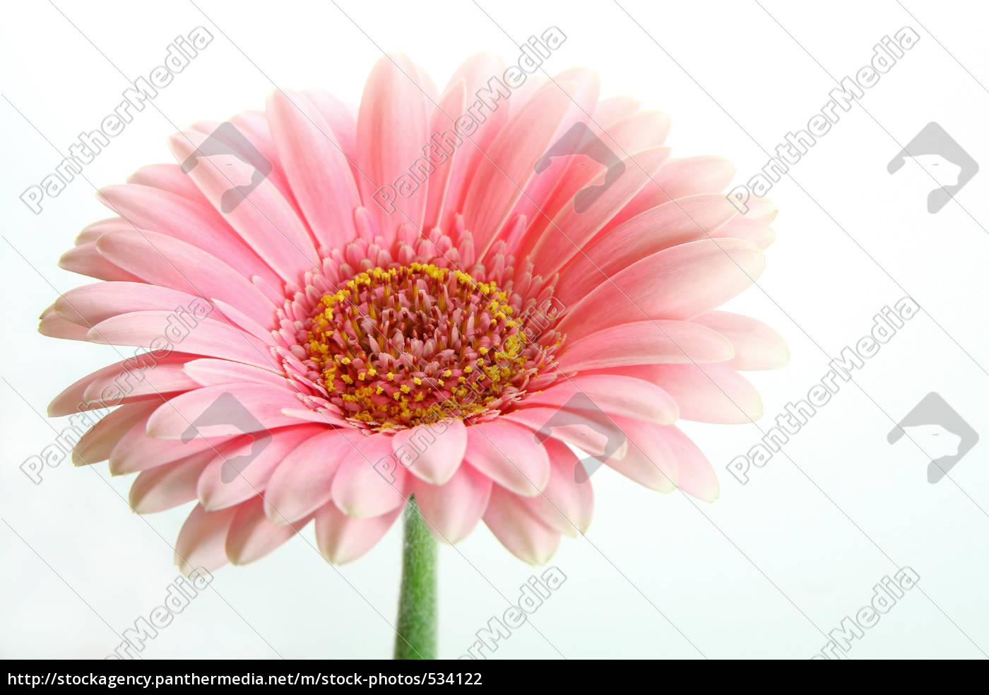 blooms - 534122