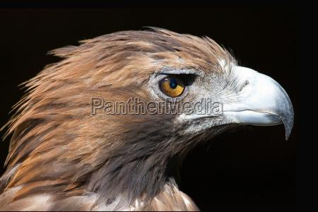eagles eye