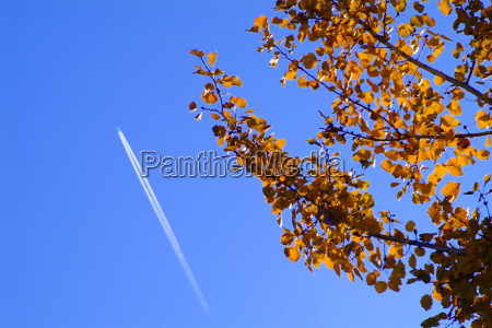tree with airplane