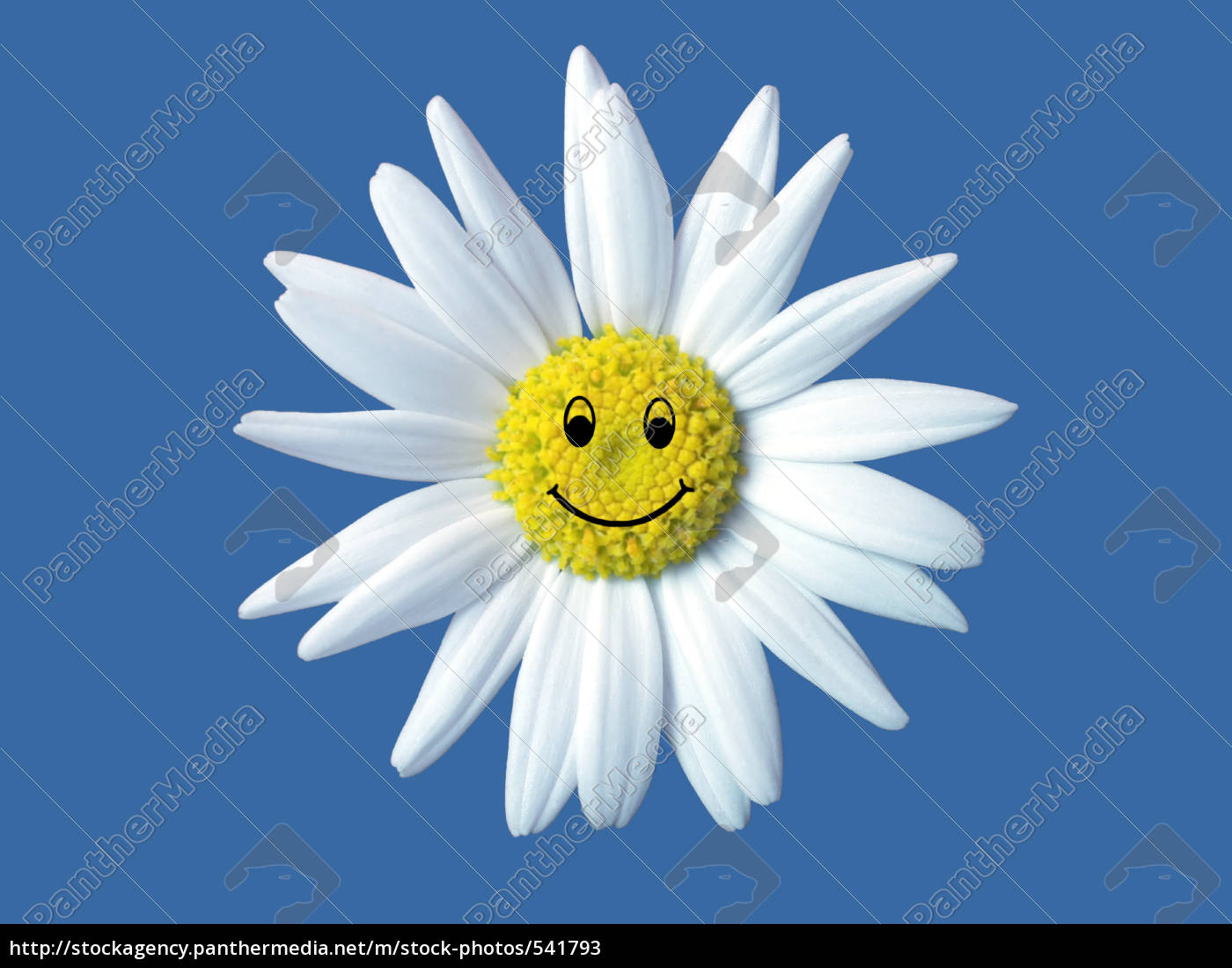 daisy, with, smiling, face - 541793