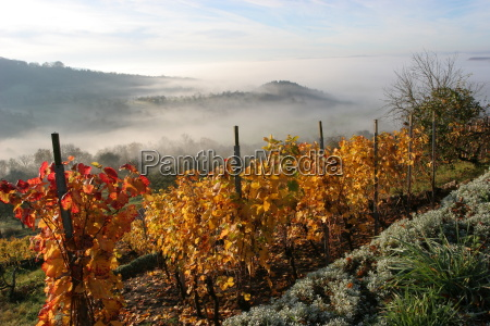 vineyard, in, the, mist - 541436