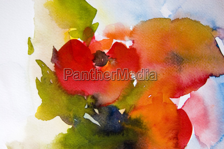 poppy, floral, watercolor - 544277