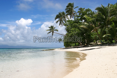 lonely, white, beach, with, palm, trees - 545700