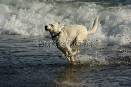 dog playing in the mediterranean