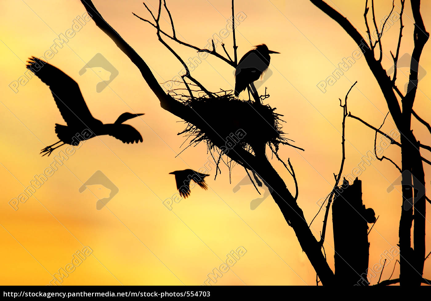 heron, in, the, morning - 554703