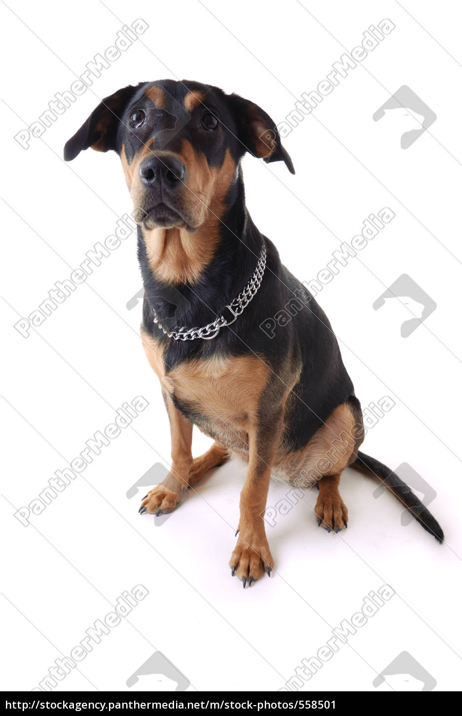 hundeportrait - 558501