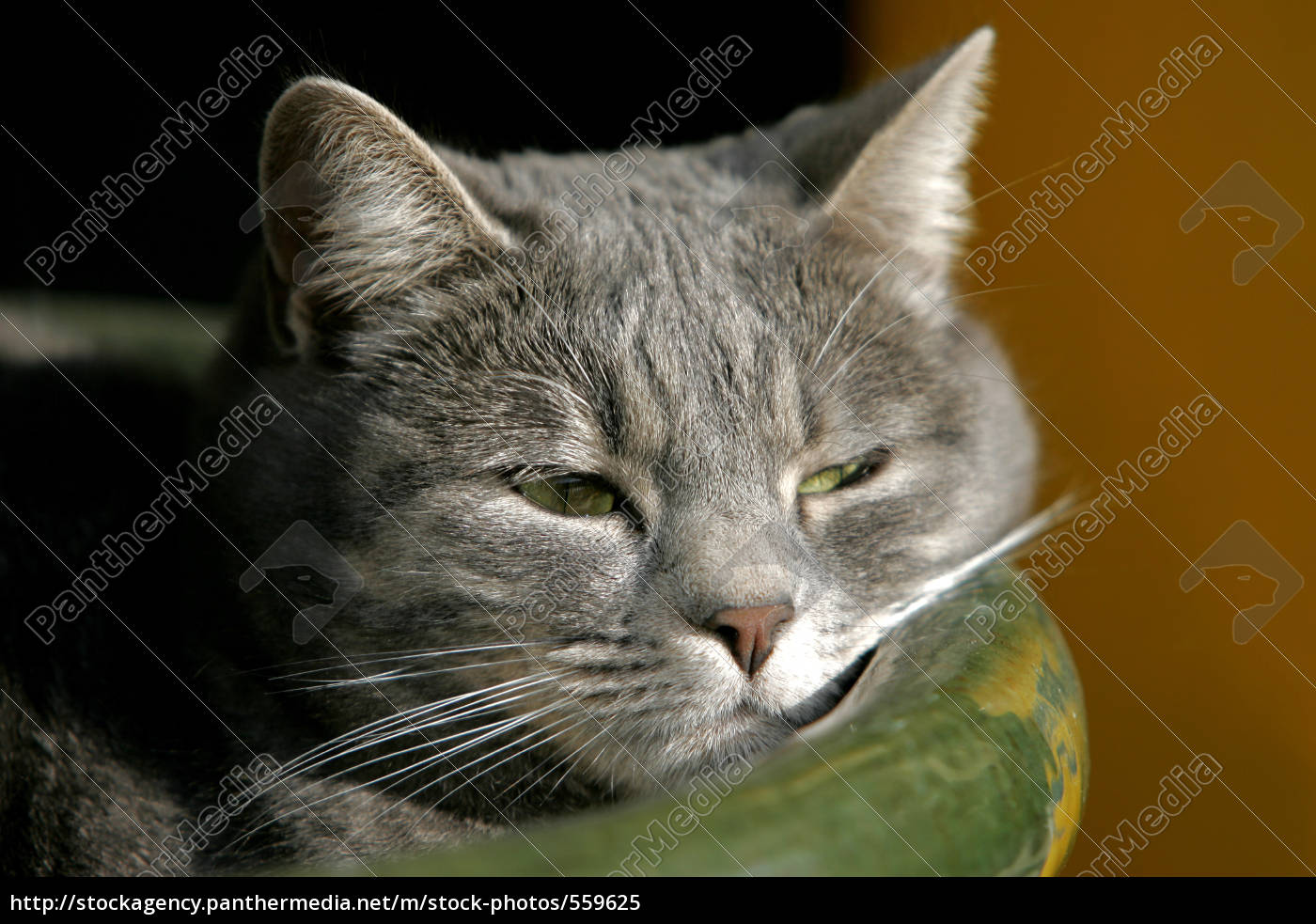 cat, in, the, flowerpot - 559625