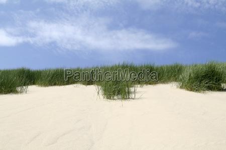 plants, on, the, island, dune - 560529