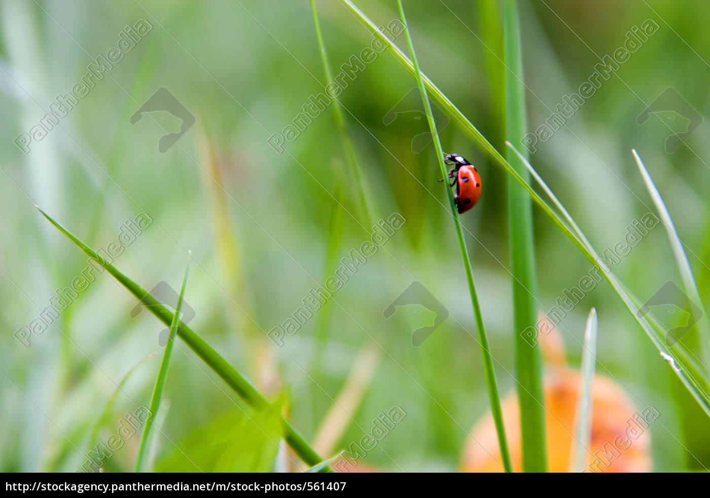 a, ladybug, on, the, way, up - 561407