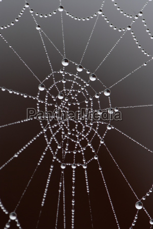 morning, dew, on, spider, web - 562311