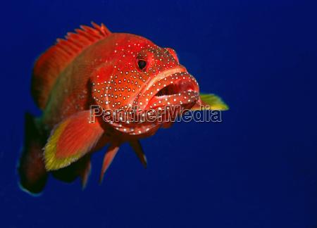coral, grouper - 563197