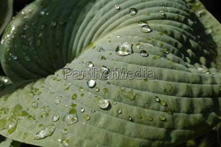 leaf landscape 2